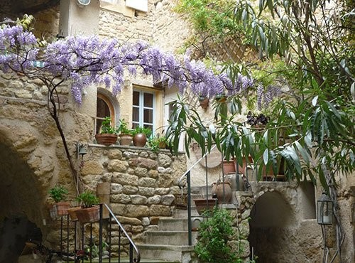 """Photo cour et glycine 2"""